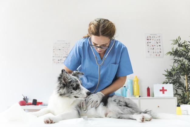 Alegerea medicului veterinar